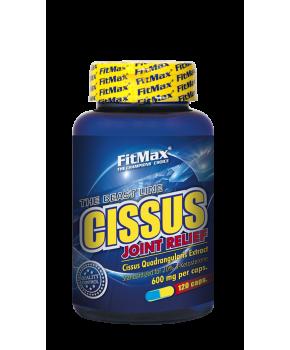 CISSUS_120-290x350